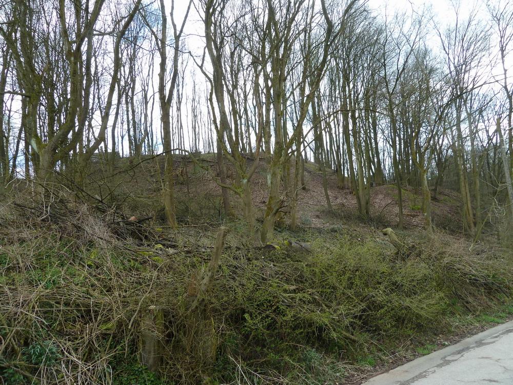 Das Waldgelände vom Böhler Weg aus gesehen.